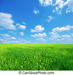 Sunny spring landscape - Green grass and blue sunny sky...