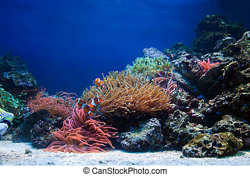Underwater life, Fish, coral reef in ocean