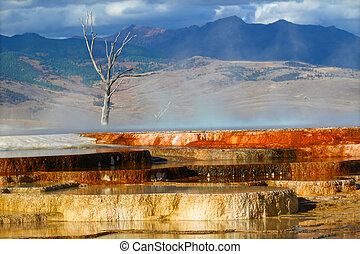 Canary Spring of Yellowstone Park