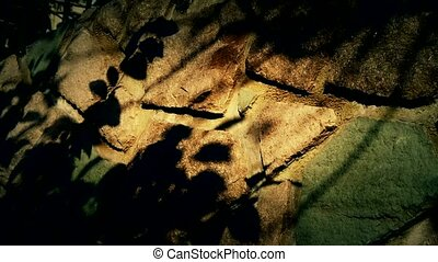 swing leaves silhouette shadow on stone wall.