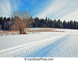 snow-covered road in winter field