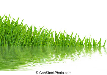 Grass with realistic water reflections, isolated on white