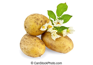 Potato yellow with a flower - Three yellow potato tuber with...