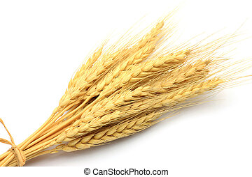 wheat ear - I took a wheat ear in a white background