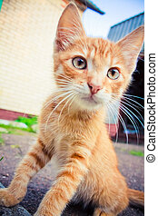 A red kitten sitting on a stone - Photo taken with wide...