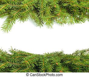 Fir branch - Green fir tree branch on white background