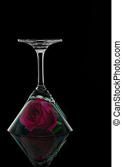 Rose in overturn cocktail glass on black background and...
