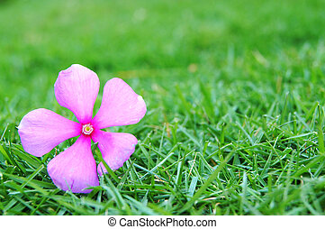 flower on the grass - pink flower on the green grass