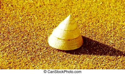 cone-shell on gold sandy beach,wind blow sand