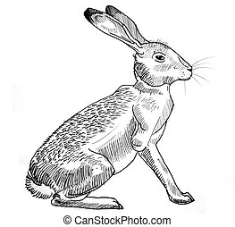 Rabbit sitting - ink drawing of a sitting rabbit