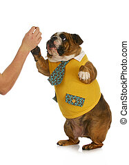 dog giving high five - high five - hand of person giving...
