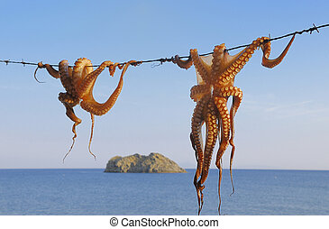 Octopus hanging up to dry in the sunshine in the Greek...