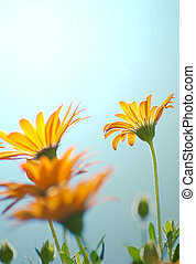 Daisy background. - Abstract dream like image of a group of...