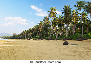Tropical landscape with palm