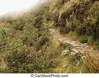 Section of Inca trail in Andes - Tropical plants along Inca...