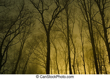 fog in the forest at night