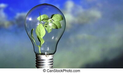 Plant in light bulb, sky - Plant in light bulb, rotate. Blue...