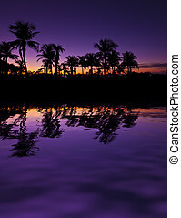 Paradise Oasis - Palm trees silhouettes reflection in the...