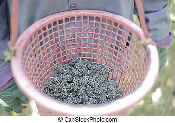 Mulberry in basket