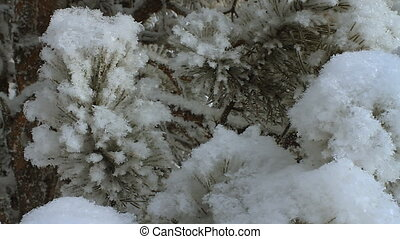 Winter scene 17 - Snow and pine leaf