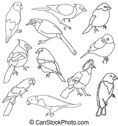 Vector set of different species of birds.