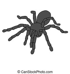 Tattoo of black widow isolated on white background.