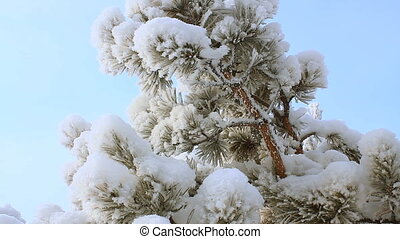 Winter scene 19 - Snow and pine leaf