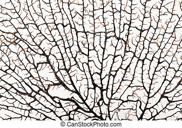 Structure of a coral similar labyrinth - Silhouette of brown...