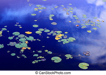 Water lilies - Water lily leaves on mirror smooth lake...