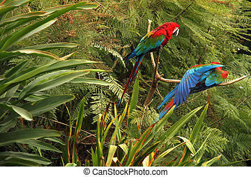 Parrots in the Forest	 - A Parrot in the tropical Forest.