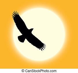 Desert eagle - Silhouette of flying eagle on sun background