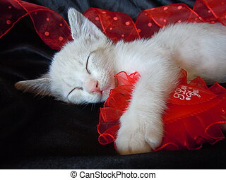 sleeping kitten and red heart - little kitten hugging red...