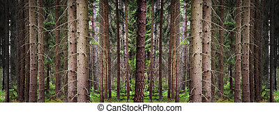 Wallpaper conifer forest - Wallpaper image of conifer forest...
