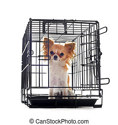 chihuahua in kennel - chihuahua closed inside pet carrier...