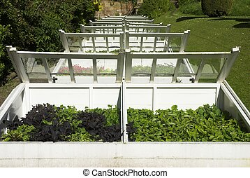 Cold Frames - Traditional Old Cold Frames For Plants