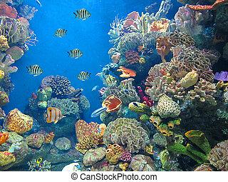 aquarium - fish in the sea...