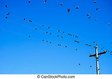 #2, egyenes, madarak, erő