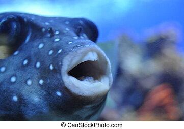 peixe, boca