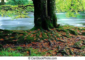 Tree Roots - Old Tree Roots With Green Moss By A Stream