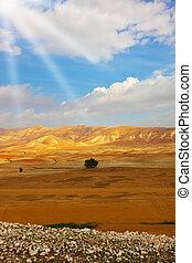 Desert Sinai in December