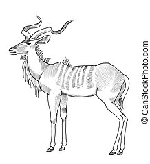Kudu standing - pen drawing of a greater kudu, standing