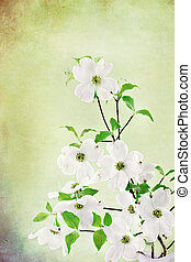 Dogwood Blossoms - Textured image of a bouquet of white...
