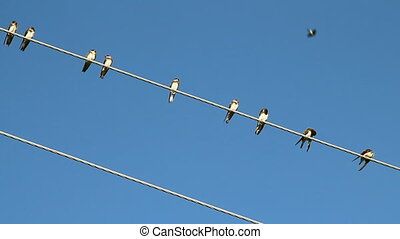 Birds on a electrical wire over blu