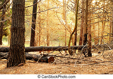 Forest in Mar de las Pampas - In the forest of Mar de las...