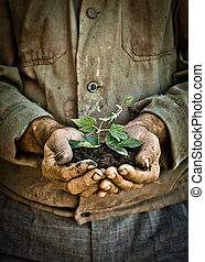 Man hands holding a green young plant - Elderly man hands...