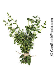 Oregano - Bunch of fresh oregano, tied with string, over...