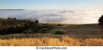 Foggy hillside panorama - Blanket of fog covers golden...