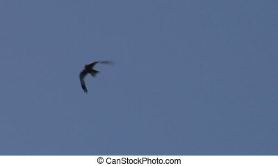 hawk fly 06 - Flying hawk silhouette