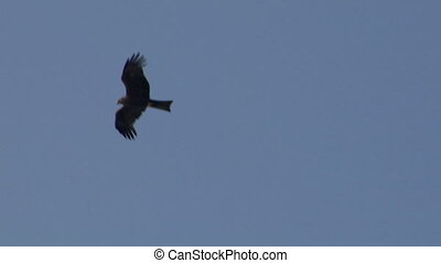 hawk fly 08 - Flying hawk silhouette