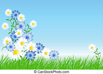 Cornflowers, camomiles with green grass